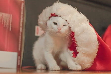white kitten near red textile