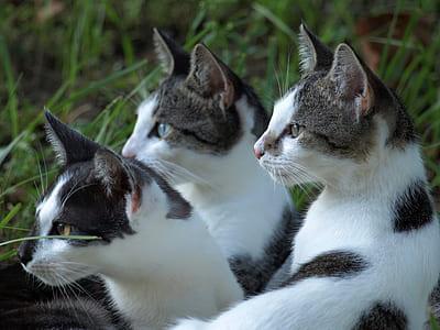 closeup photo of three white-and-gray cats