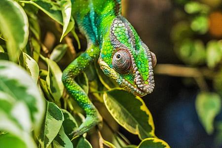 green lizard on plant