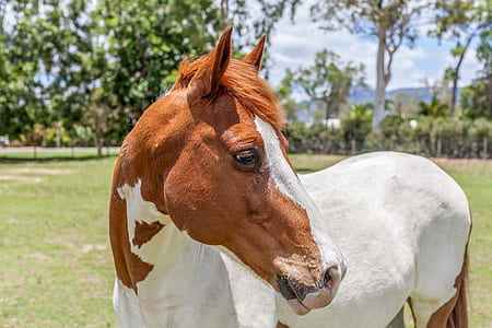 brown and white horse on grass field
