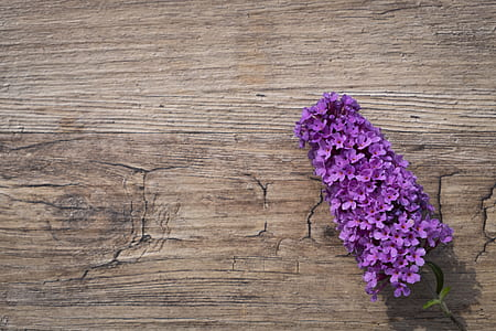 purple flower on brown wooden table-top
