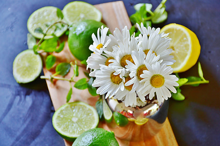 white sunflower with sliced lemons