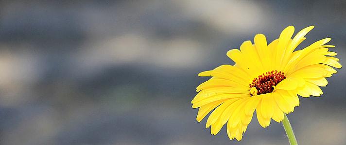 tilt lens photography of sunflower