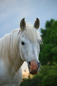 selective focus photography of white horse