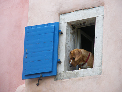 short-coated tan dog on window