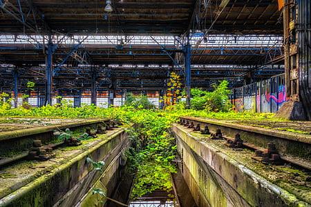 green leaf plants inside warehouse at daytime