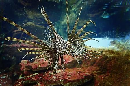 fish swimming at sea
