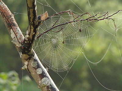 spider web in closeup photography