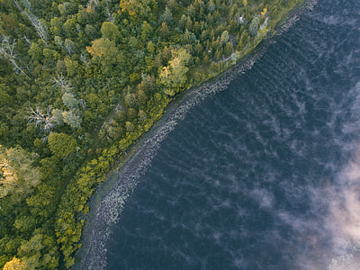 aerial landscape photography of a beach near forest