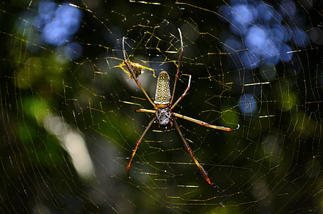Close Up Photo of Brown and Yellow Garden Spider
