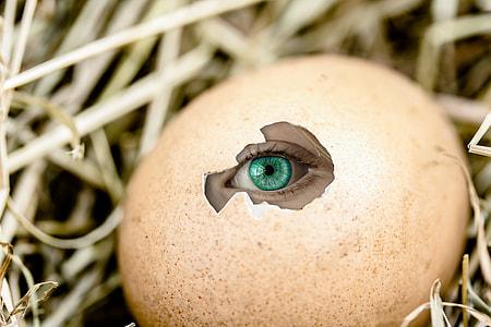 teal eye peeping on cracked brown egg on nest