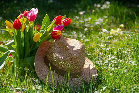 brown straw hat on grasses near tulip flowers