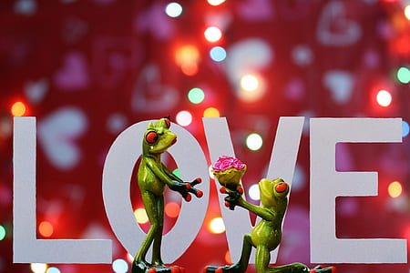 green frog offering bouquet of flower to female frog graphic wallpaper