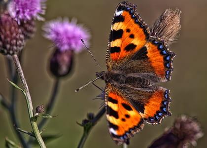 orange, black, and blue butterfly on purple flower