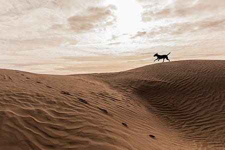 silhouette of horse running in sand field