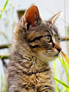 shallow focus photography of brown kitten