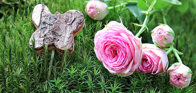 pink roses with plants