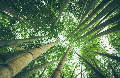 green bamboo sticks in low angle photography