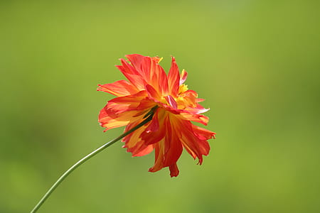 Tilt Shift Photography of Red and Yellow Flower