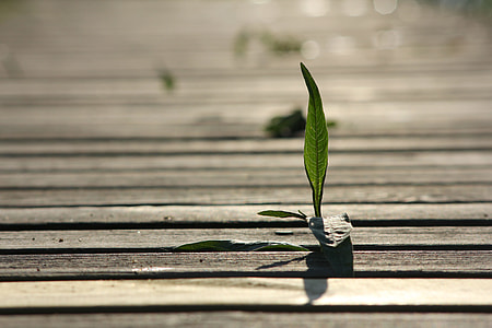 photo of green leaf on brown wooden board