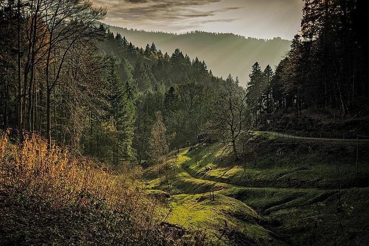 Black Forest Dawn