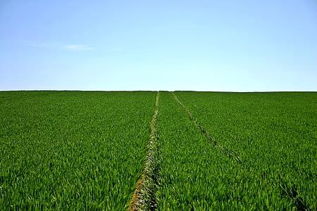 Blue Skies over a Green Grass Field