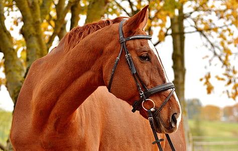 brown horse near tree