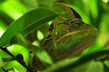 shallow photography of green and brown lizard during daytime
