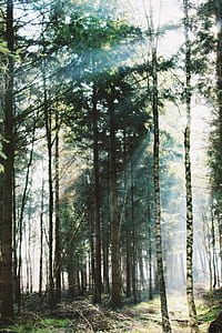photo of forest during day time