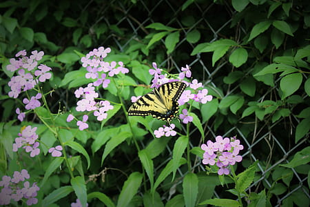 Beige and Black Butterfly on Purple Flower during Daytime