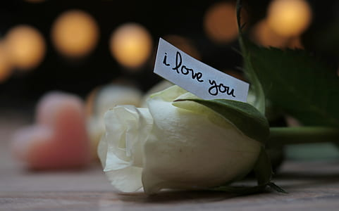 depth of field photography of white rose with i love you printed paper
