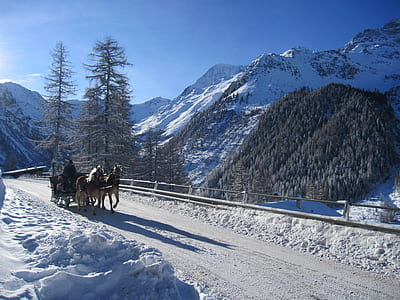 two brown horse on snow road