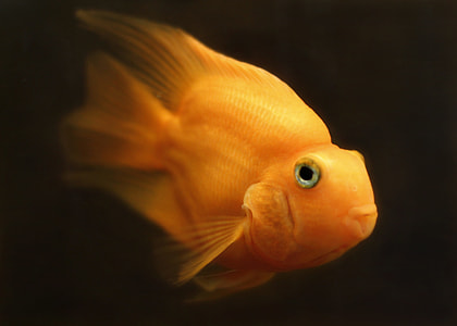 selective photography of fish