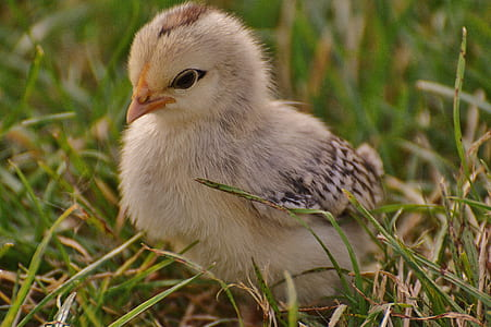 macro photography of chick
