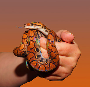 person holding an orange snake