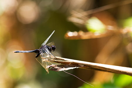 dragonfly during daytime
