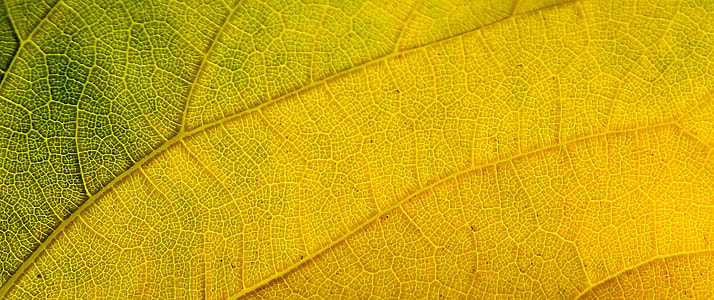 macro photography of green and yellow leaf