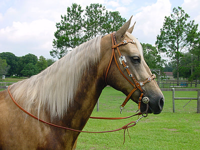 white and brown horse on grass field