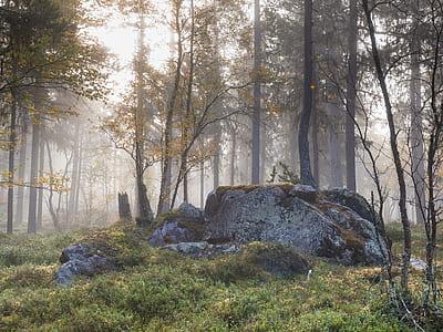 gray rock surrounding trees during daytime