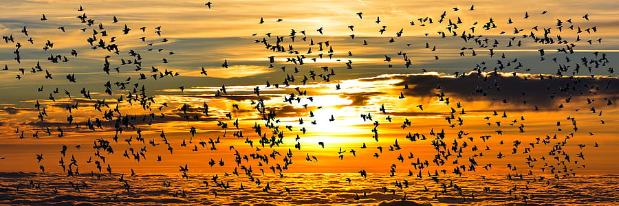 flight of birds with sunset background
