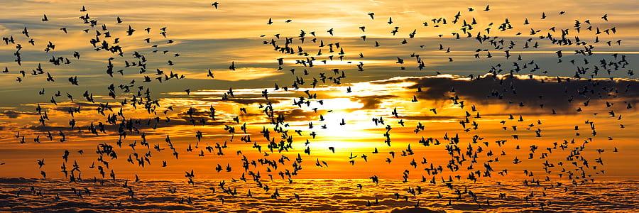 flight of birds with sunset background