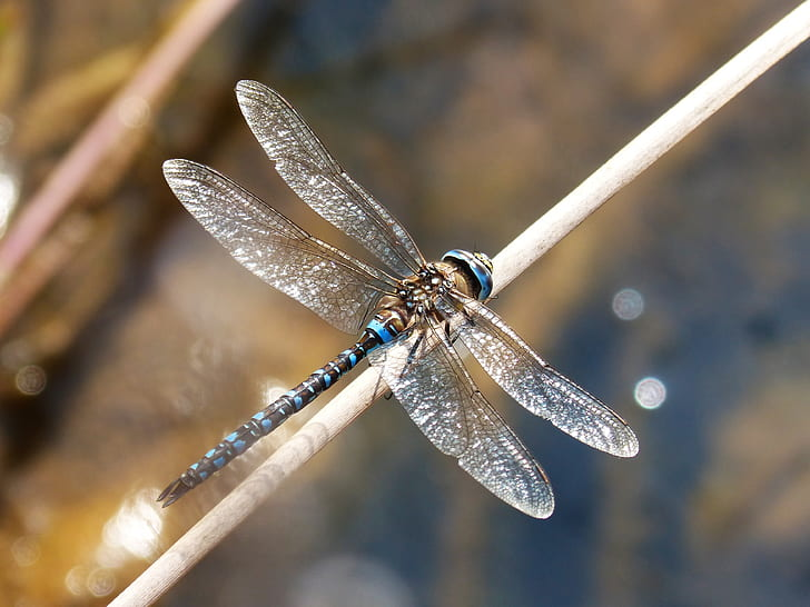 blue and black dragon fly on brown plant stem