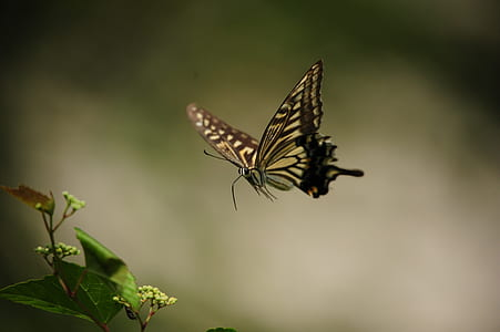 tiger swallowtail butterfly near green leaf plant