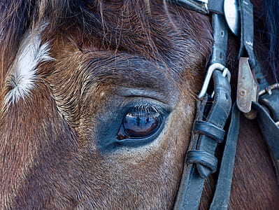 shallow focus photography of eye of brown horse