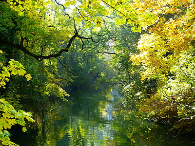 river between trees during daytime