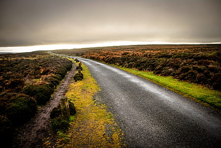 gray curving concrete road