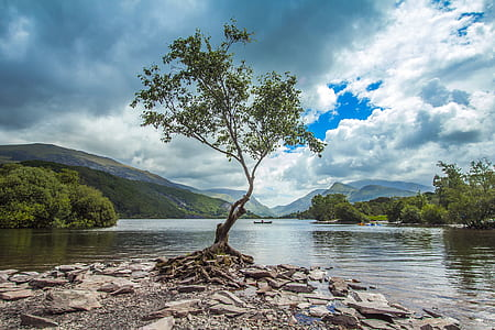 tree in the middle of body of water photo