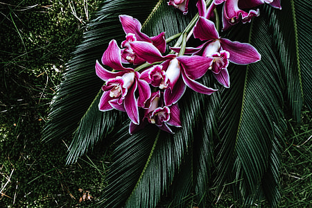 Tropical arrangement with dendrobium and sago palm