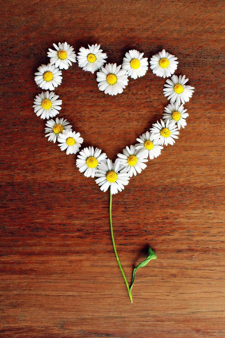 heart-shaped white daisy on tabletop