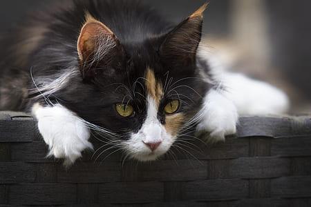 Focus Photo of Calico Cat